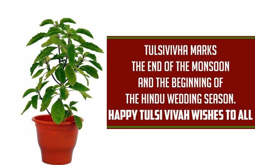Tulasi Vivah(Devothan Ekadasi)  2021 status